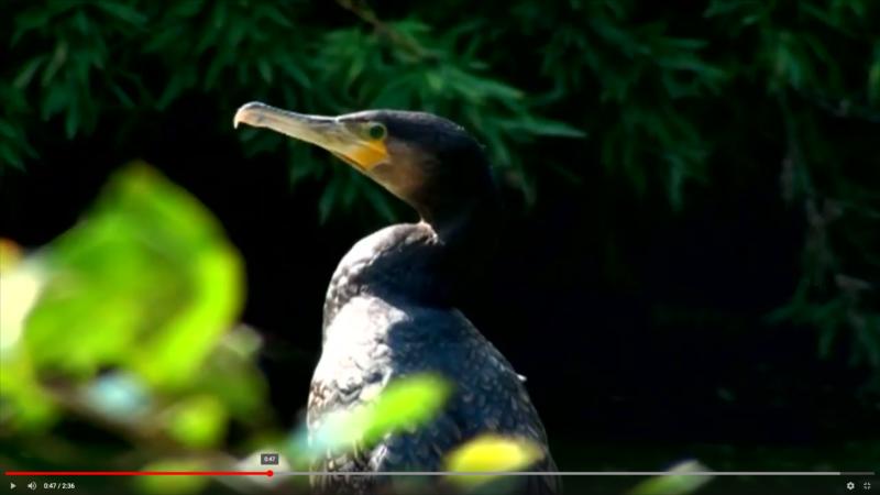 Elogio degli uccelli di Giacomo Leopardi